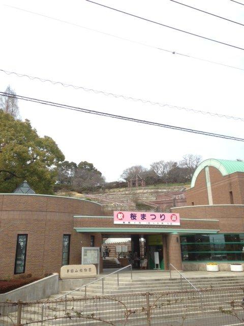 2017年半田山植物園桜まつり